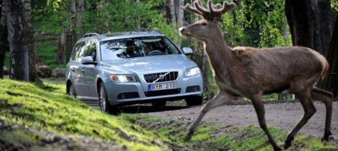 Cómo actuar ante accidentes de tráfico con animales