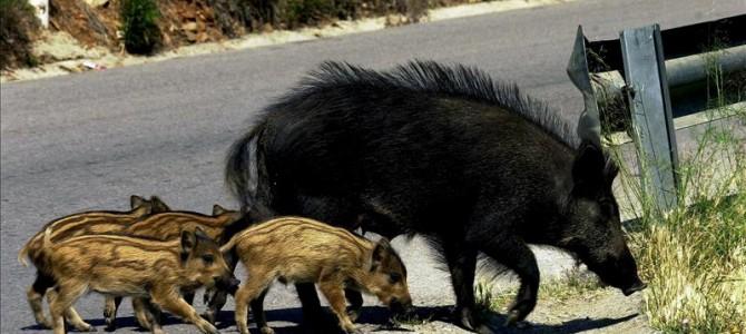 Nuevo accidente de tráfico con animales