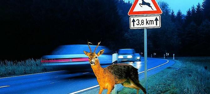 Un accidente de tráfico con animales a la semana
